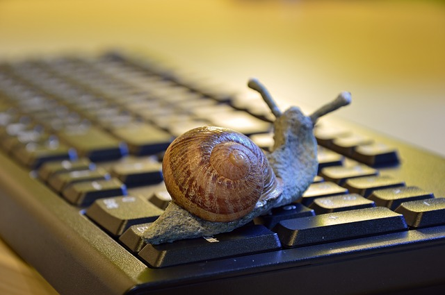 Snail on a keyboard