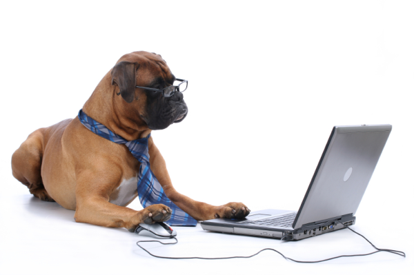 dog on laptop